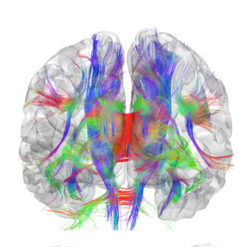 15 PhD positions in Visual and Computational Neuroscience
