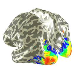 We're hiring! Postdoc position for collaborative 7T fMRI project with Spinoza Center Amsterdam