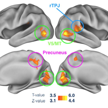 A novel measure to determine viewing priority and its neural correlates in the human brain